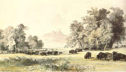 Paysage du Haut-Missouri avec troupeau de bisons