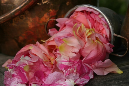 rose-flower-water-june-2011-011