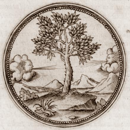 arbre à myrrhe