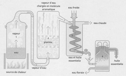 Processus_distillation_huile_essentielle