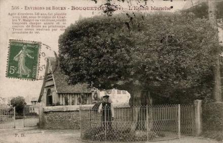 Aubépine de Bouquetot dans l'Eure