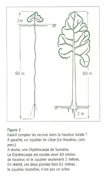 Croquis extrait du livre de Francis Hallé, Plaidoyer pour l'arbre (p. 18)