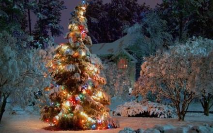 arbre_solstice